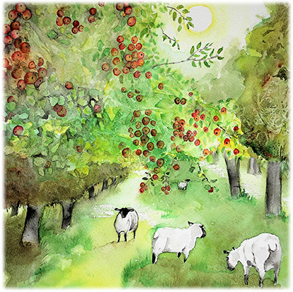 Somerset Orchard